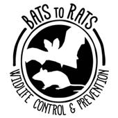 Bats to Rats